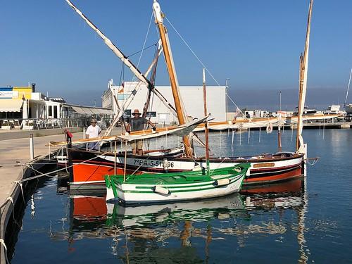 Les llatines a la plaça del port