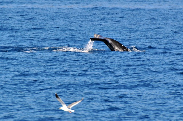 Whale and Gull