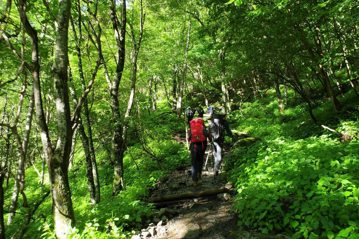 南アルプス北岳 序盤の樹林帯登山