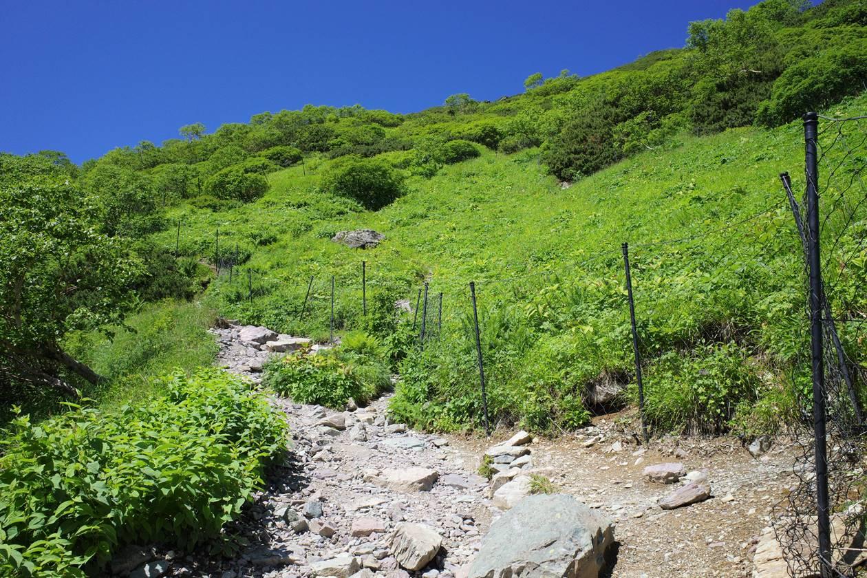 南アルプス北岳 お花畑(鹿よけの柵)