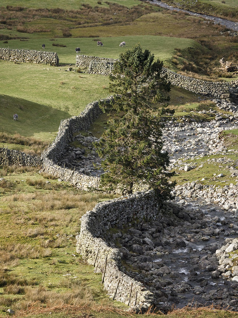 Dry stone wall beside Redacre Gill, Great Langdale, Lake District National Park, Cumbria, UK