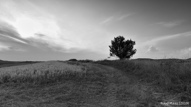 Lonely tree at Jobbagytelke (Romania)