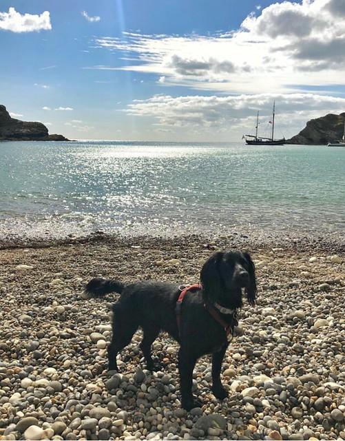 Moonfleet  Adventure Sailing, Lulworth Cove, lunadog2017 on instagram, Jurassic Coast, Dorset, Taken by Luna Dog 2018 in Lulworth Cove