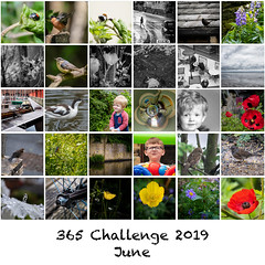365 - June 2019