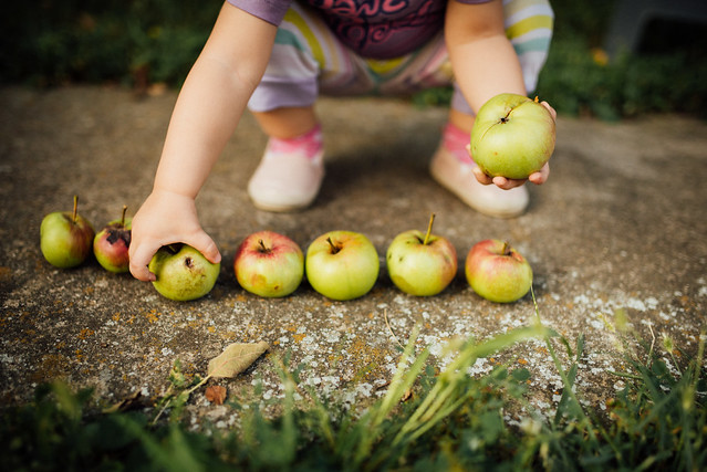 A little girl collecting apples from the concrete