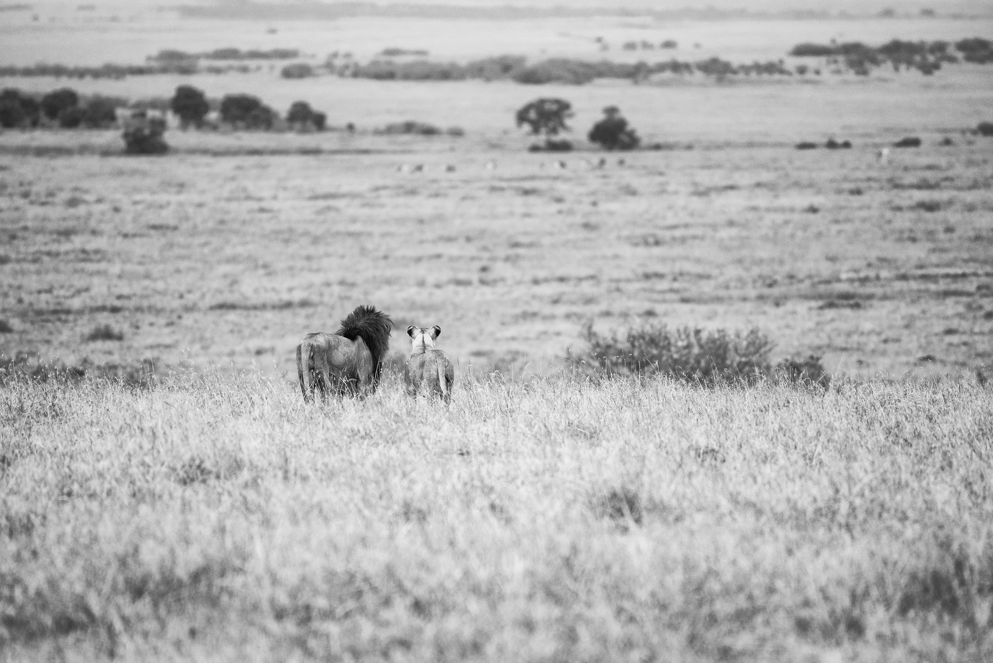 The wide mara