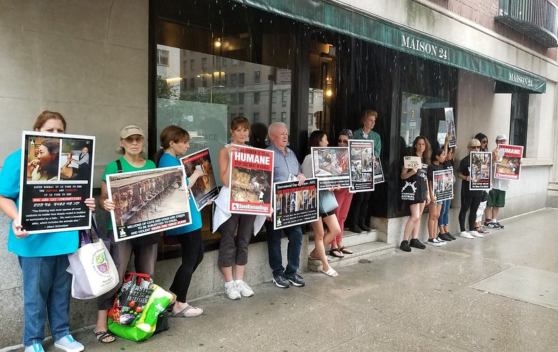 Demonstration for the South Korean Dogs and Cats (Day 3) – August 9, 2019 Organized by The Animals' Battalion