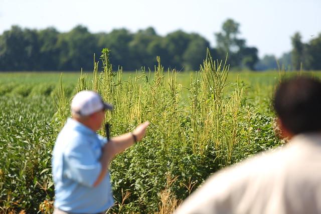 Lon-Mann-crop-rsrch-field-day_0176