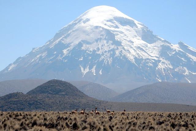 Vicuñas e Nevado Sajama (6542m)