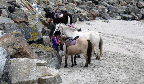 Horses and ponies on the beach at Maghery Beach in Ireland