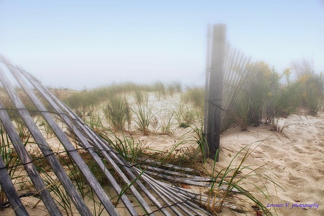 Foggy Dunes.