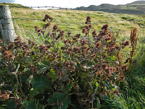 Weeds and burrs crowd a wire fence on the Inishowen Peninsula in Ireland