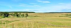 fazenda e reflrestamento