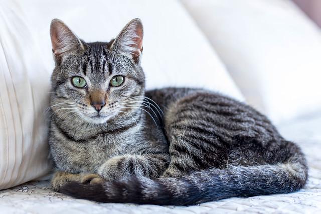 Tom, the cat