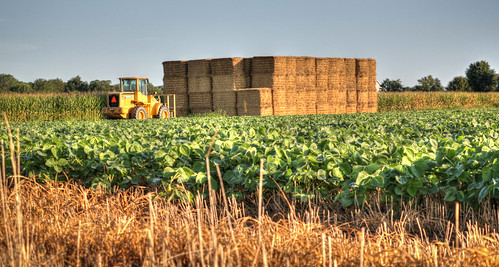 Local fields....6O3A8646_7_8_tonemappedAb