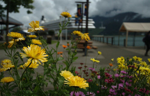 Flowers on the Waterfront