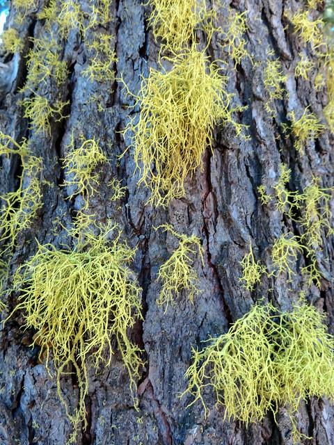 lichens everywhere