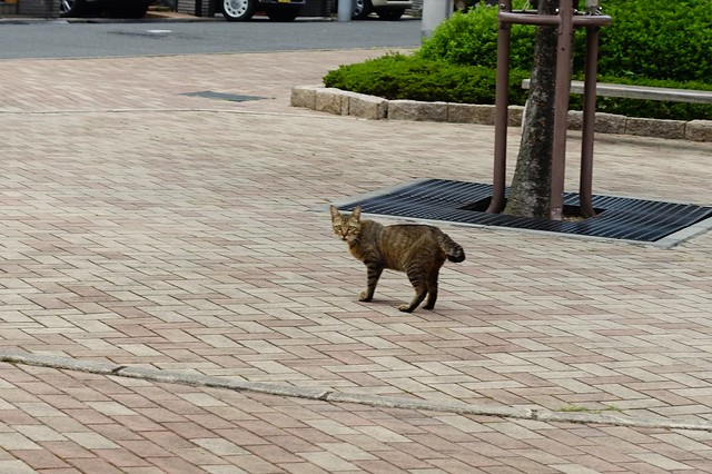 Today's Cat@2019-08-17