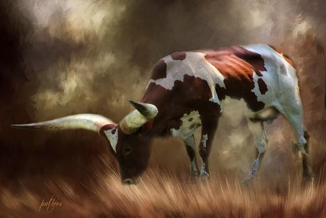 Ankole Watusi Cattle....(Explored)