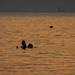 Two silhouettes in the sea