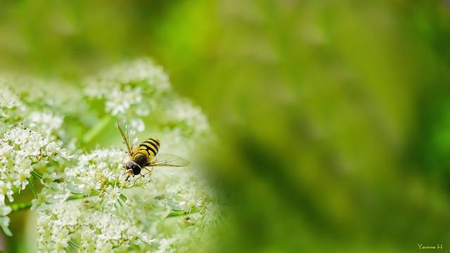 BEE-AUTIFUL - 7254