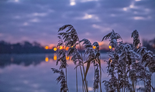 canon6d nature landscape outdoors grasses sky clouds reflection lake dawn sunrise uk cambridgeshire outside