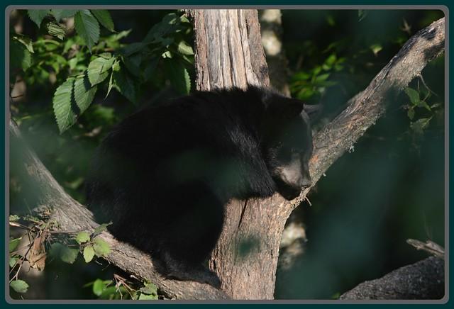 \^/ Cub Tree Time \^/