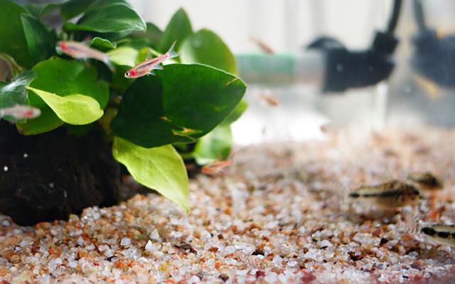 ミニ 熱帯魚水槽 水作 リトルアクアリウム