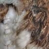 Detail of a kakahu #feathers #kakahu