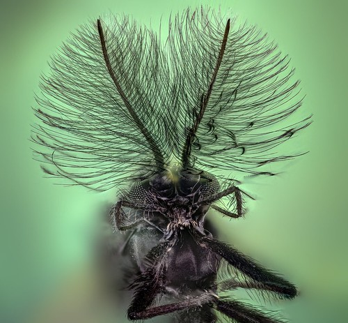 Fancy fly