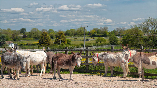 Loads of Donks