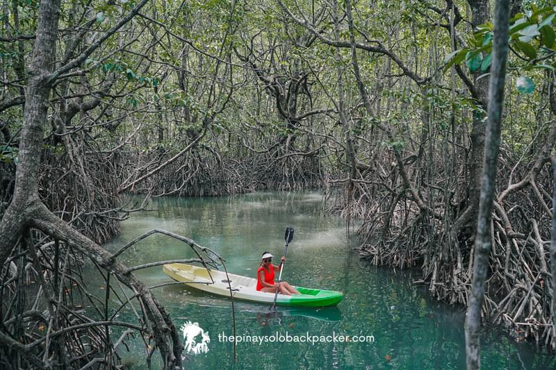 SAN VICENTE PALAWAN: MANGROVE FOREST