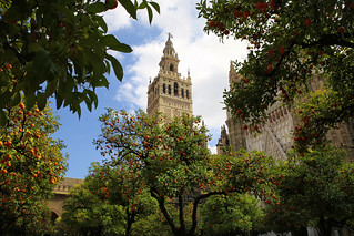 Giralda tower seen from Patio de los Naranjos