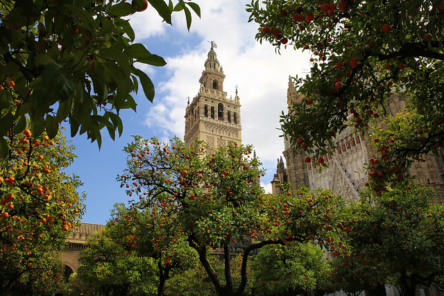 Giralda tower seen from Patio de los Naranjos