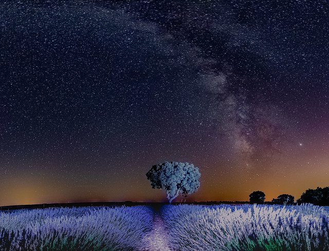 The Milky Way and the Lavender Fields ........., La Vía Láctea y los Campos de Lavanda.........