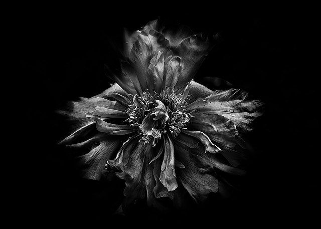 Backyard Flowers In Black And White 49