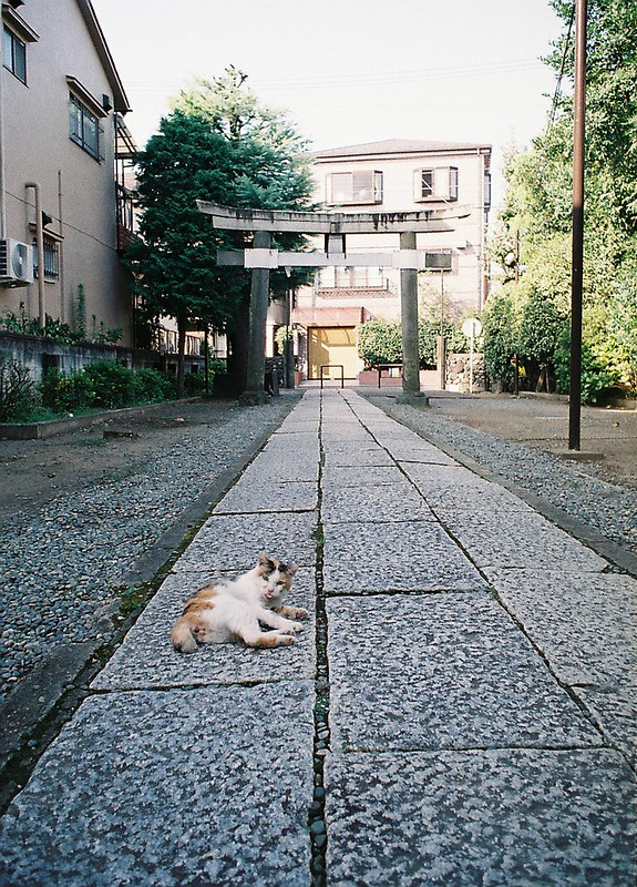 23OLYMPUS PEN FT+G Zuiko AUTO W 20mm f3 5+FUJIFILM PRO 400H志茂熊野神社の三毛