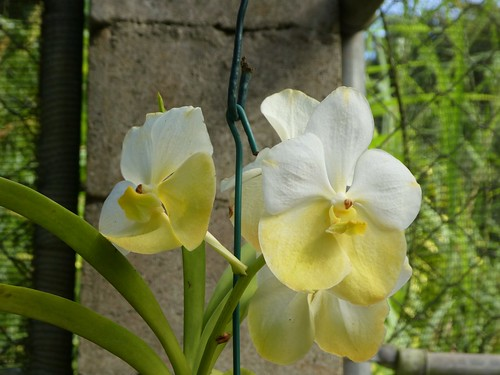 Barbados - Orchid World and Tropical Flower Garden