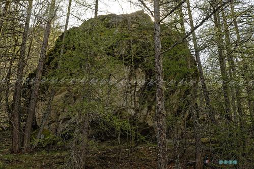 nikon paca d850 cloud mountain france flores tree nature rock forest montagne french landscape view picture vert ciel arbres paysage vue rocher forêt parcdesecrins