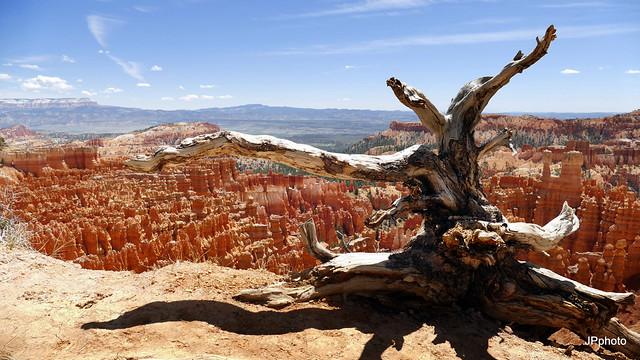 USA - Brice Canyon- il aimerait s'envoler .....