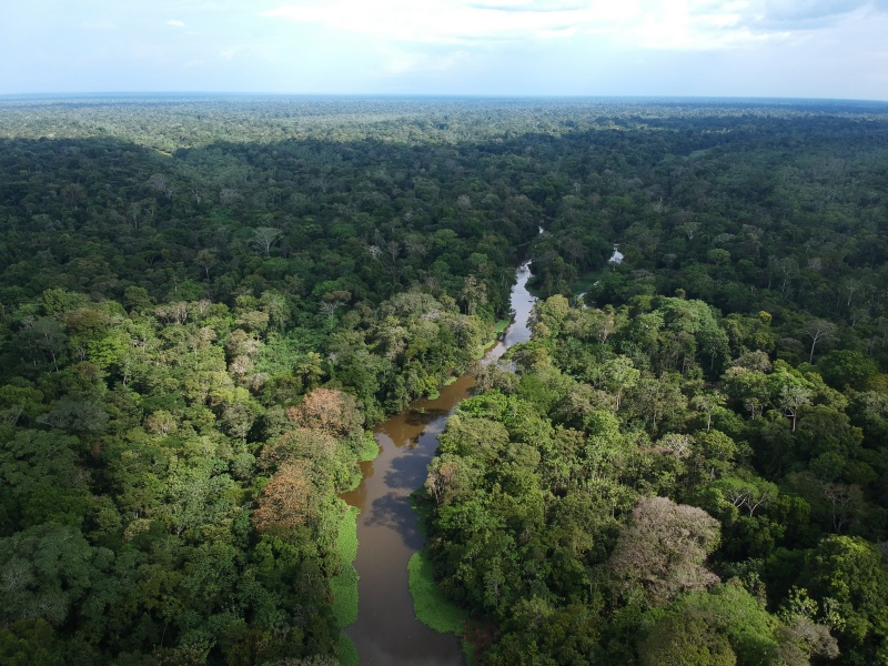 drone over Amazon Rainforest