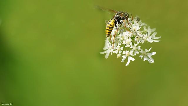 Bee-autiful - 7156