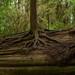Dying tree donates life