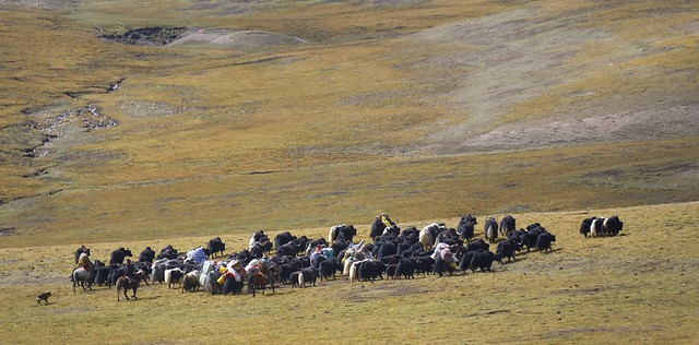 Nomads on the move, Tibet 2018