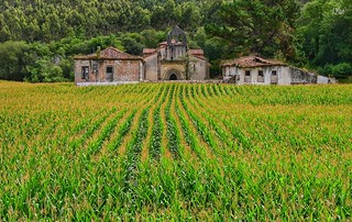 Monasterio de trigo