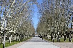 Alley in Salamanca
