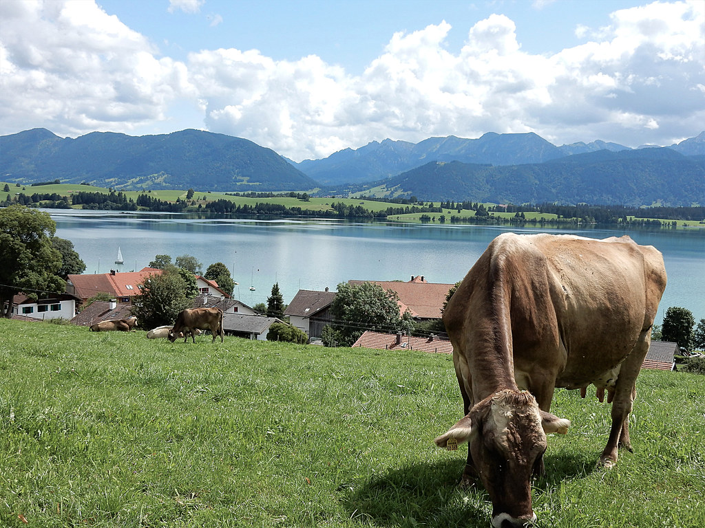 Forggensee, Bavaria - Germany (N4146)