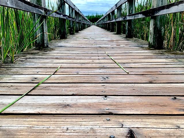 Mer Bleue Boardwalk - Low Perspective