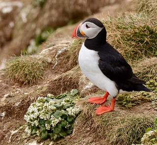 Bye bye Puffins time to move on to the next adventure