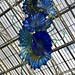 Chihuly: Temperate House